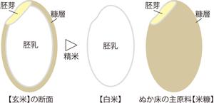 米糠の構造300web