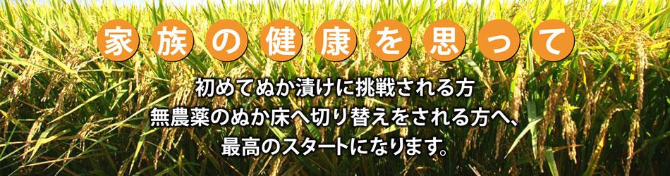 無農薬稲穂